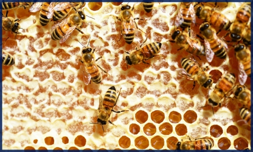 Are Cell Phones Killing the Bees?